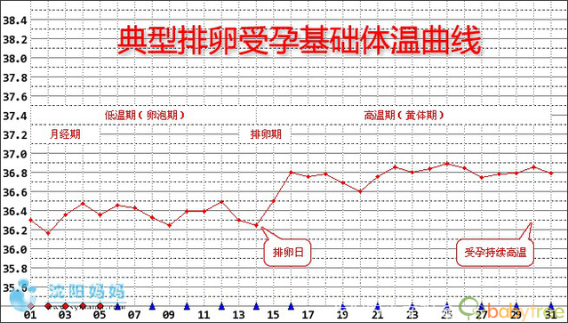 排卵期体温图_游爸游妈备孕之:各种典型基础体温曲线图图样 - 我们的小幸福 ...