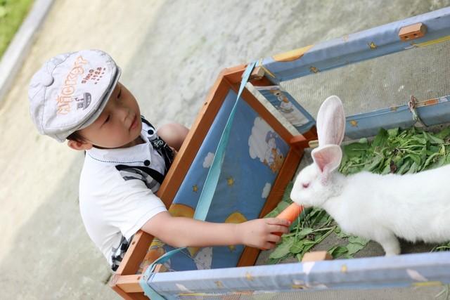 喂小白兔吃胡萝卜