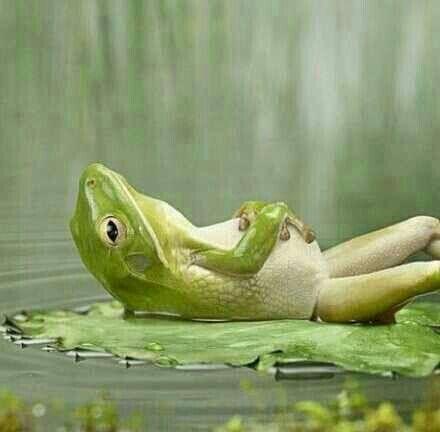 青蛙睡觉姿势的图片有吗