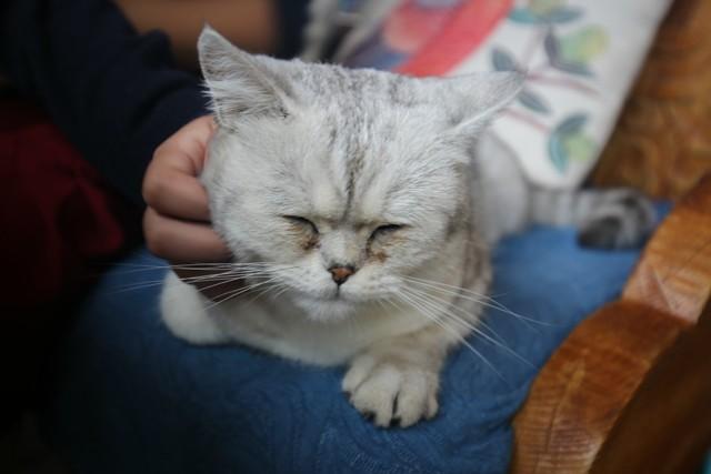 10月5日,吃早餐时遇见客栈的猫咪,贝儿一摸它就很享受的闭上眼睛